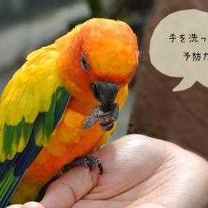 鳥クラミジア症の症状・予防法